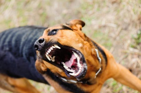 consecuencia de la rabia canina